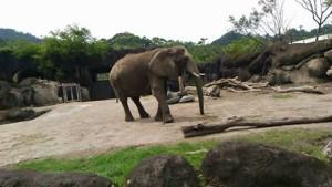 elephant in Taipei zoo